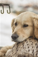 Preview iPhone wallpaper Dog, rest
