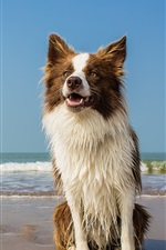 Preview iPhone wallpaper Dog, wet, beach, waves, sea