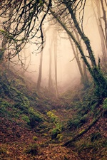 Preview iPhone wallpaper Forest, trees, branches, ravine, fog