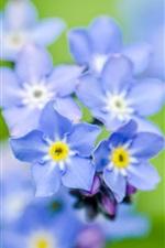 iPhone обои Незабудки цветы, синий