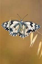 Preview iPhone wallpaper Grass, butterfly, bokeh