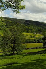 Kettlewell, England, pasture, trees, fields