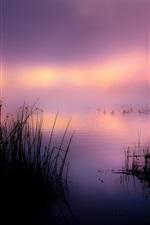 Lake, reeds, duck, fog, morning