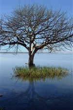 Preview iPhone wallpaper Lonely tree, lake, blue