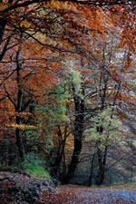 Preview iPhone wallpaper Nature forest, autumn, trees, leaves, path