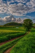 Nature landscape, fields, trees, clouds, sky