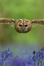 Preview iPhone wallpaper Owl, bird, flight, wings, flowers