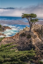 Preview iPhone wallpaper Pebble Beach, California, USA, coast, sea, trees
