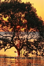 Preview iPhone wallpaper Sea, trees, sunset, red sky