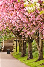Preview iPhone wallpaper Sheffield, England, park, trees, cherry blossom, road, steps, spring