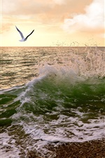 Preview iPhone wallpaper Sunset, coast, gull, sea waves, clouds