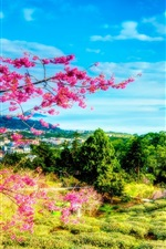 Preview iPhone wallpaper Taiwan, China, spring, cherry, trees, mountains, house
