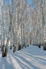 Preview iPhone wallpaper Thick snow, winter, birch trees