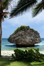 Cenário, ilha, mar, pedra, palmeiras tropicais