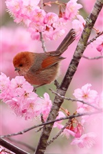Preview iPhone wallpaper Two birds, branches, pink flowers, spring