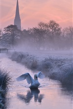 UK, England, Cathedral, winter, frost, river, trees, swan, dusk
