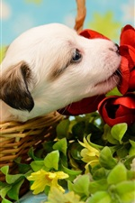 Preview iPhone wallpaper White puppy, basket, flowers