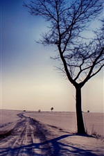 Preview iPhone wallpaper Winter, road, snow, trees, sun, dusk