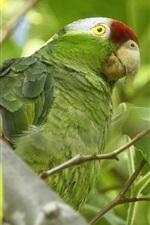 Preview iPhone wallpaper Amazon birds, green parrot