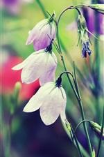 Bells flower, grass, blur
