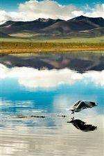 China, Tibet, mountains, clouds, lake, bird, flight