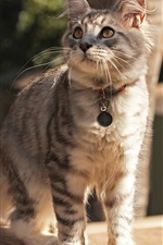 Preview iPhone wallpaper Cute cat, collar, street, attention