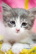 Gatinho bonito, peludo, olhos, presente