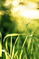 Grass, green, bokeh, light, macro, glare