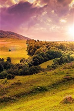 Preview iPhone wallpaper Hills, trees, meadow, flowers, sunrise