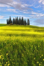 Preview iPhone wallpaper Italy, Tuscany, spring, fields, rapeseed flowers, sky, clouds