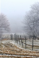 Preview iPhone wallpaper Morning fog, trees, field, fence