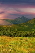 Preview iPhone wallpaper Mountains, slope, grass, trees, evening, sunset