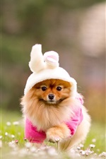 Preview iPhone wallpaper Pet, dog, costume, grass, flowers, blurring