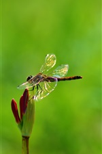 Preview iPhone wallpaper Plant, flower, insect, dragonfly