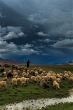 Preview iPhone wallpaper Prairie, river, field, sheep