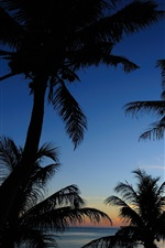 Preview iPhone wallpaper Sea, sky, clouds, palm trees, silhouette