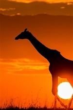 Preview iPhone wallpaper Sunset, giraffe, sunshine, dusk, sketch, Africa