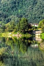 Trees, forest, mountain, village, lake