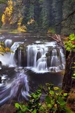 미리보기 iPhone 배경 화면 미국, 캘리포니아, 워싱턴, 루이스 강, 폭포, 가을, 숲