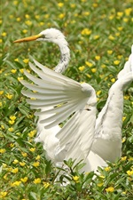 Preview iPhone wallpaper White heron, wings, flowers, birds
