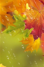 Autumn, red leaves, maple, water drops, rain