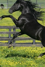 Preview iPhone wallpaper Black horse, paddock, grass, flowers