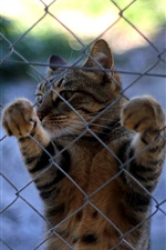 Preview iPhone wallpaper Cat, whiskers, paws, fence
