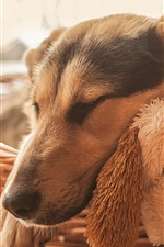 Preview iPhone wallpaper Dog sleeping, toy