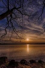 Dry trees, lake, sun, sunset, Denmark