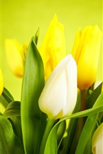 Preview iPhone wallpaper Flowers close-up, tulips, white, yellow