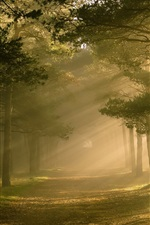 Preview iPhone wallpaper Forest, trees, sunlight, nature scenery