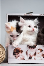 Four kittens, box