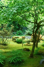 Preview iPhone wallpaper Garden, Canada, park, trees, green