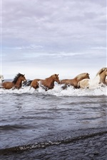 Preview iPhone wallpaper Horses, river, water